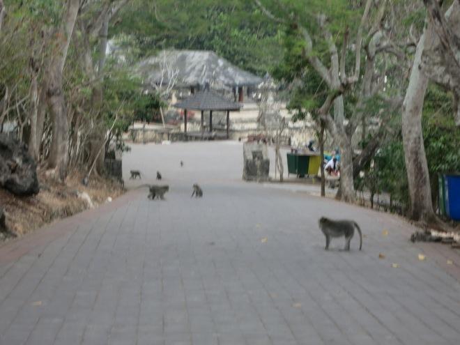 Monkey gangs at Uluwatu Temple