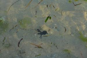 Turtle release in Bali